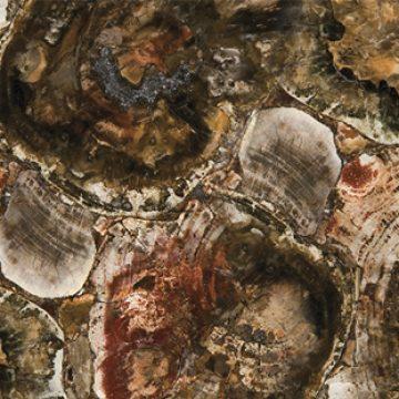 Petrified-Wood-Caesarstone